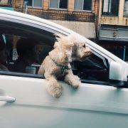 Cestovanie so psíkom či mačkou: Ako zaistiť bezpečnú prepravu v aute?